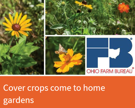 Cover crops come to home gardens - featured story